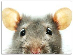 Glasunterlage Maus am Tellerrand – Bild 1