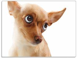 Glasunterlage Lustiger Hund mit fliegenden Ohren – Bild 1