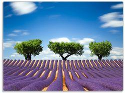 Glasunterlage Abstraktes lila Blumenfeld mit Lavendel – Bild 1