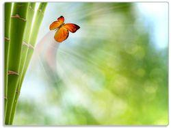 Glasunterlage Schmetterling im Grünen mit Bambus – Bild 1
