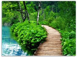 Glasunterlage Holzweg im Wald – Bild 1