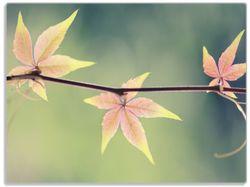 Glasunterlage Herbstblume – Bild 1