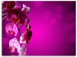 Glasunterlage Rosafarbene Orchidee  Blüten in pink – Bild 1