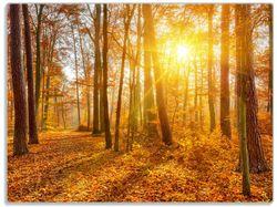 Glasunterlage Sonnenuntergang im herbstlichen Wald – Bild 1