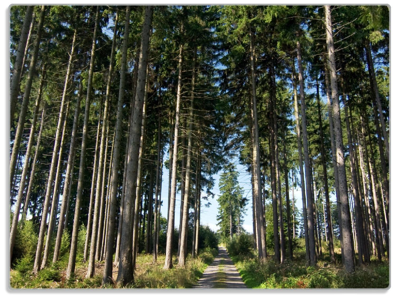 Glasunterlage Stiller Waldweg – Bild 1