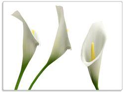 Glasunterlage Callas weiß gelb – Bild 1