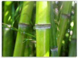 Glasunterlage Bambus im Sonnenschein – Bild 1