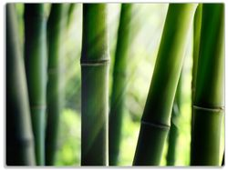 Glasunterlage Bambuswald und Sonnenstrahlen – Bild 1