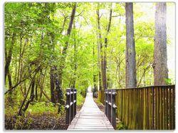 Glasunterlage Spaziergang im Wald  Holzweg über einen Fluss