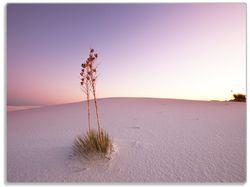 Glasunterlage Kleine Oase in der Wüste – Bild 1