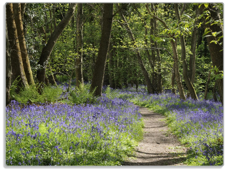 Glasunterlage Wiese voller blauer Hasenglöckchen im Wald – Bild 1