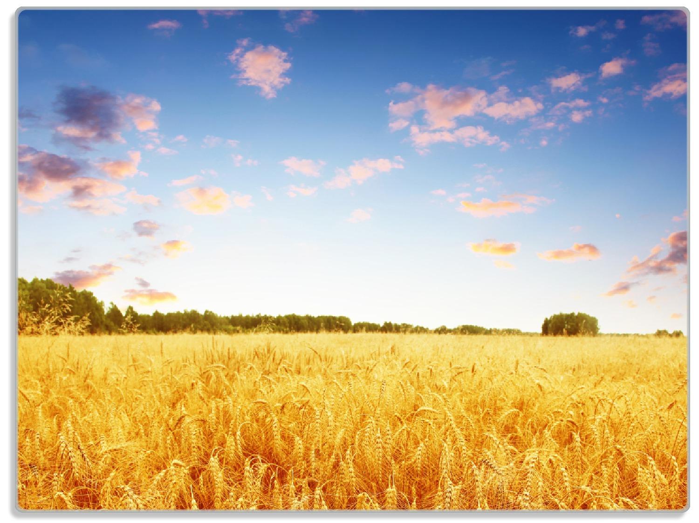 Glasunterlage Weizenfeld unter blauem Himmel – Bild 1