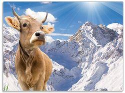 Glasunterlage Kuh im Sonnenschein in den Alpen – Bild 1