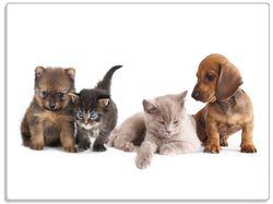 Glasunterlage Hundewelpen und Katzenjunge – Bild 1
