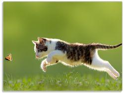 Glasunterlage Süße Katze fängt Schmetterling im Grünen – Bild 1