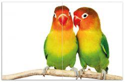 Herdabdeckplatte Papageien auf dem dünnen Ast – Bild 1