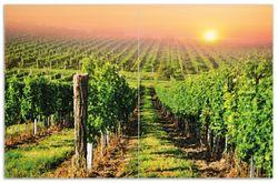 Herdabdeckplatte Weinberg mit untergehender Sonne – Bild 1