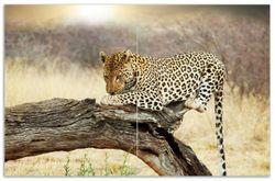 Herdabdeckplatte Leopard auf Baumstamm in Afrika – Bild 1