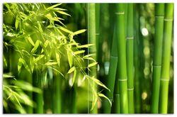 Herdabdeckplatte Bambuswald mit grünen Bambuspflanzen – Bild 1
