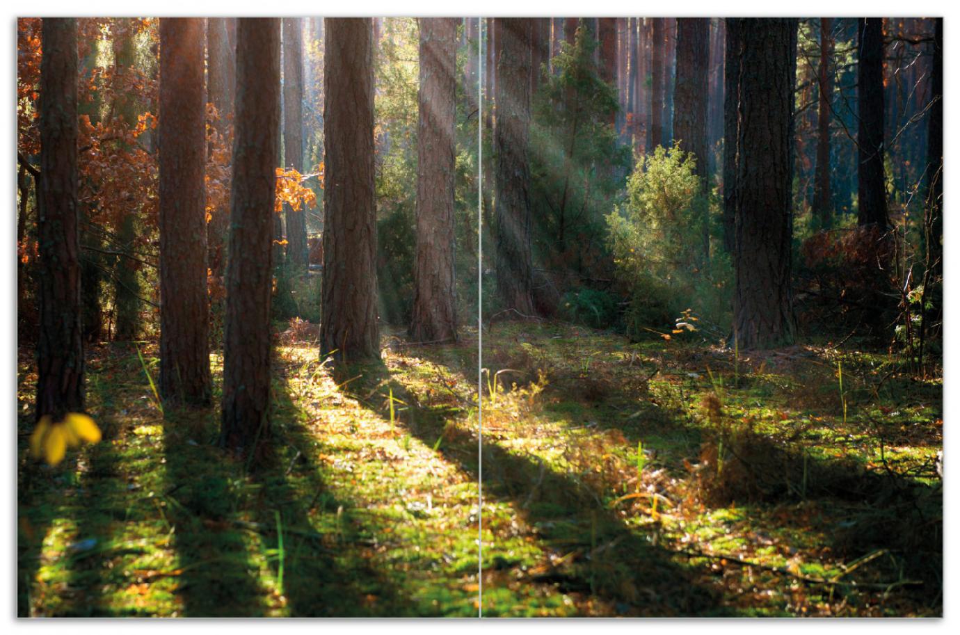Herdabdeckplatte Sonnenstrahlen im Herbstwald – Bild 1