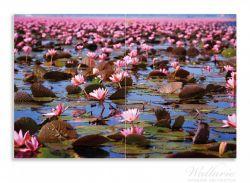 Herdabdeckplatte Seerosenlandschaft mit rosa Blüten