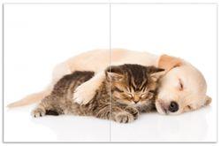 Herdabdeckplatte Katze und Hund in Harmonie - Kuschelnde Tiere – Bild 1