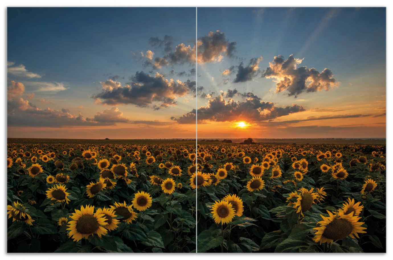 Herdabdeckplatte Sonnenblumenwiese vor Wolken mit Sonnenuntergang – Bild 1