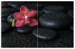 Herdabdeckplatte Orchideen-Blüte auf schwarzen Steinen, benetzt mit Wasser-Tropfen – Bild 1