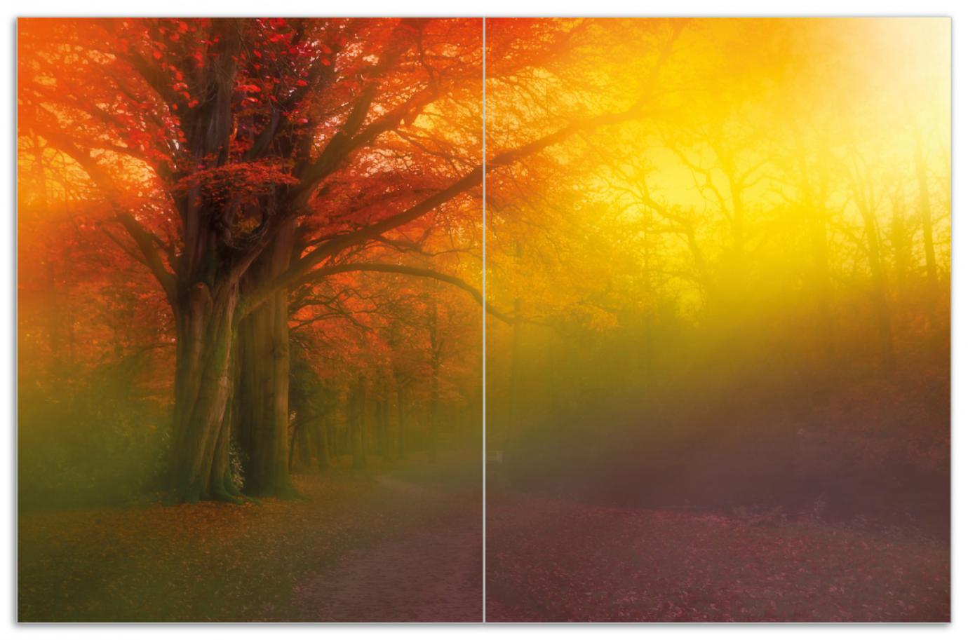 Herdabdeckplatte Bunter Herbst - Waldlandschaft bei Nebel in Regenbogenfarben – Bild 1
