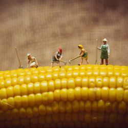 Möbelfolie Lustige Bauernfiguren auf einem Maiskolben beim Arbeiten – Bild 3