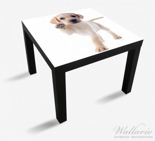 Möbelfolie Süßer Labrador-Welpe sagt Hallo – Bild 1