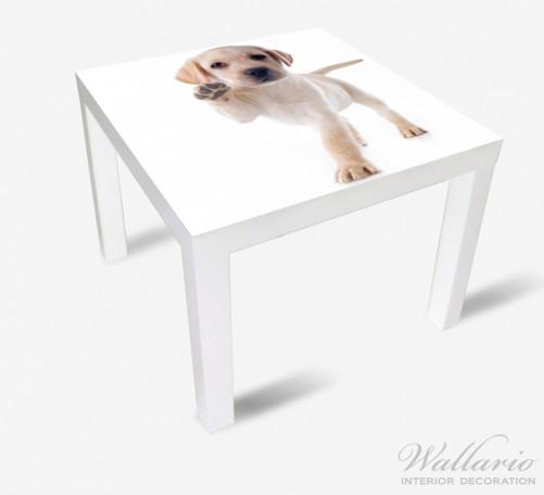 Möbelfolie Süßer Labrador-Welpe sagt Hallo – Bild 2