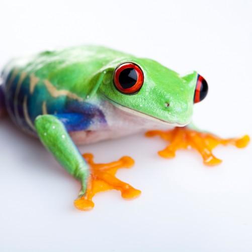 Möbelfolie Lustiger Frosch in grün und orange – Bild 3