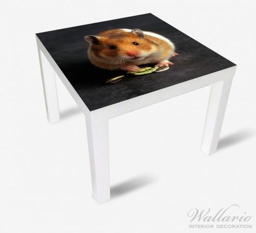 Möbelfolie Putziger Hamster mit Nüssen zwischen den Pfoten – Bild 2
