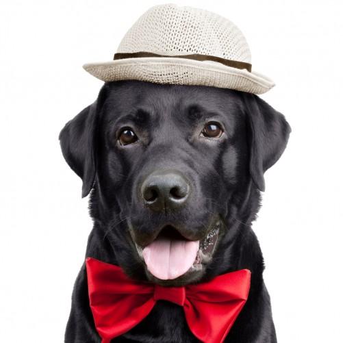 Möbelfolie Schwarzer Labrador Retriever mit roter Fliege und Mütze – Bild 3