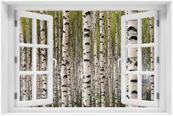Acrylglasbild Birkenwald - Baumstämme in schwarz weiß