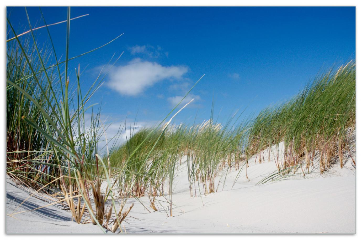 Herdabdeckplatte Düne am Strand unter blauem Himmel – Bild 1