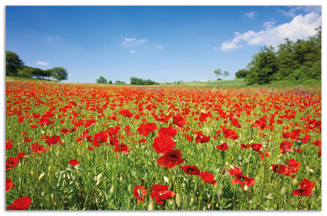 Herdabdeckplatte Mohnblumenfeld- rote Blumen unter blauem Himmel – Bild 1