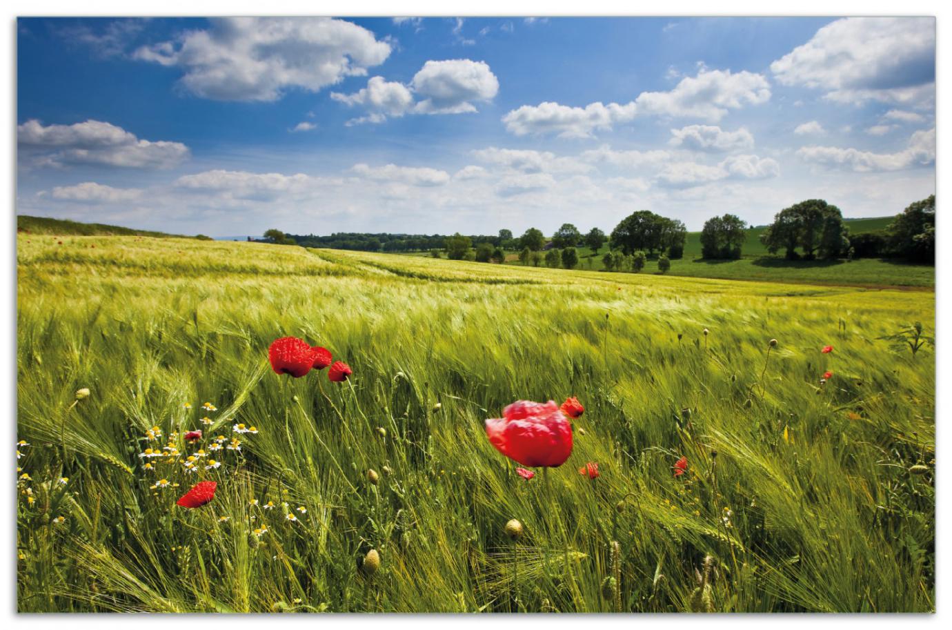 Herdabdeckplatte Mohnblumenwiese auf grüner Wiese unter blauem Himmel – Bild 1