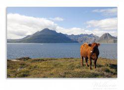 Herdabdeckplatte Kuh in den Bergen