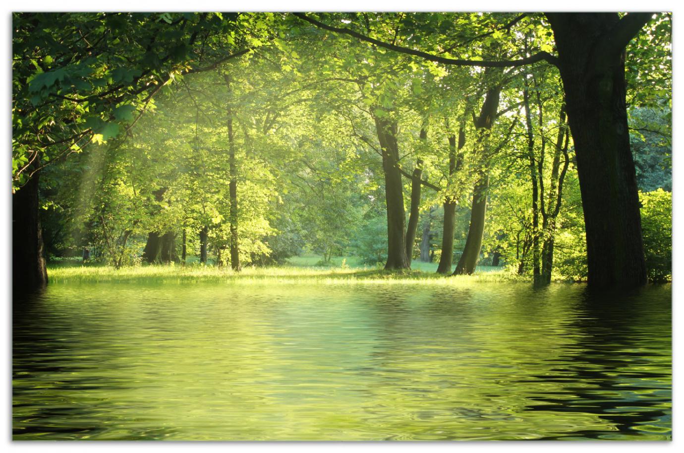 Herdabdeckplatte Idyllischer See im Wald bei Sonnenschein – Bild 1
