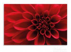 Herdabdeckplatte Rote Dahlienblüte in Nahaufnahme