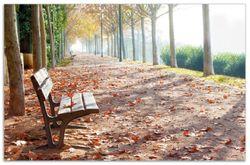 Herdabdeckplatte Einsame Parkbank an einer Allee - Herbststimmung – Bild 1