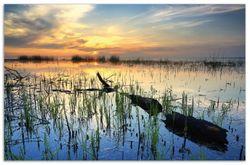 Herdabdeckplatte Schilf am Abend - Sonnenuntergang über der Seelandschaft – Bild 1