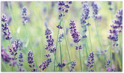 Herdabdeckplatte Lila Blumenfreude - Violette Pflanzen auf der Wiese – Bild 1