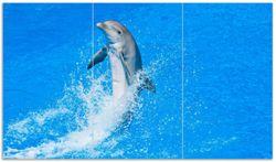 Herdabdeckplatte Fröhlicher Delfin im blauen Wasser