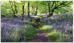 Herdabdeckplatte Blaues Hasenglöckchen im Wald
