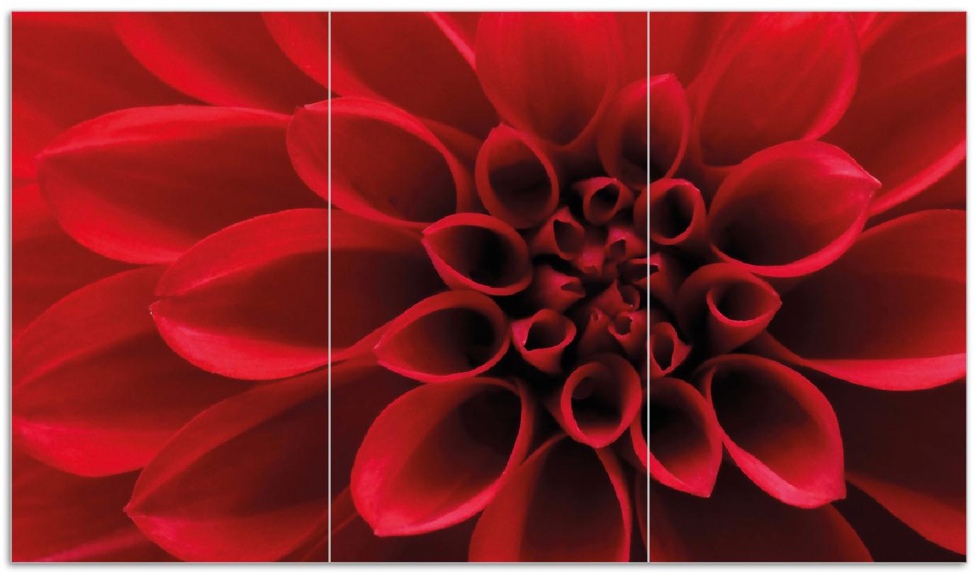 Herdabdeckplatte Rote Dahlienblüte in Nahaufnahme – Bild 1