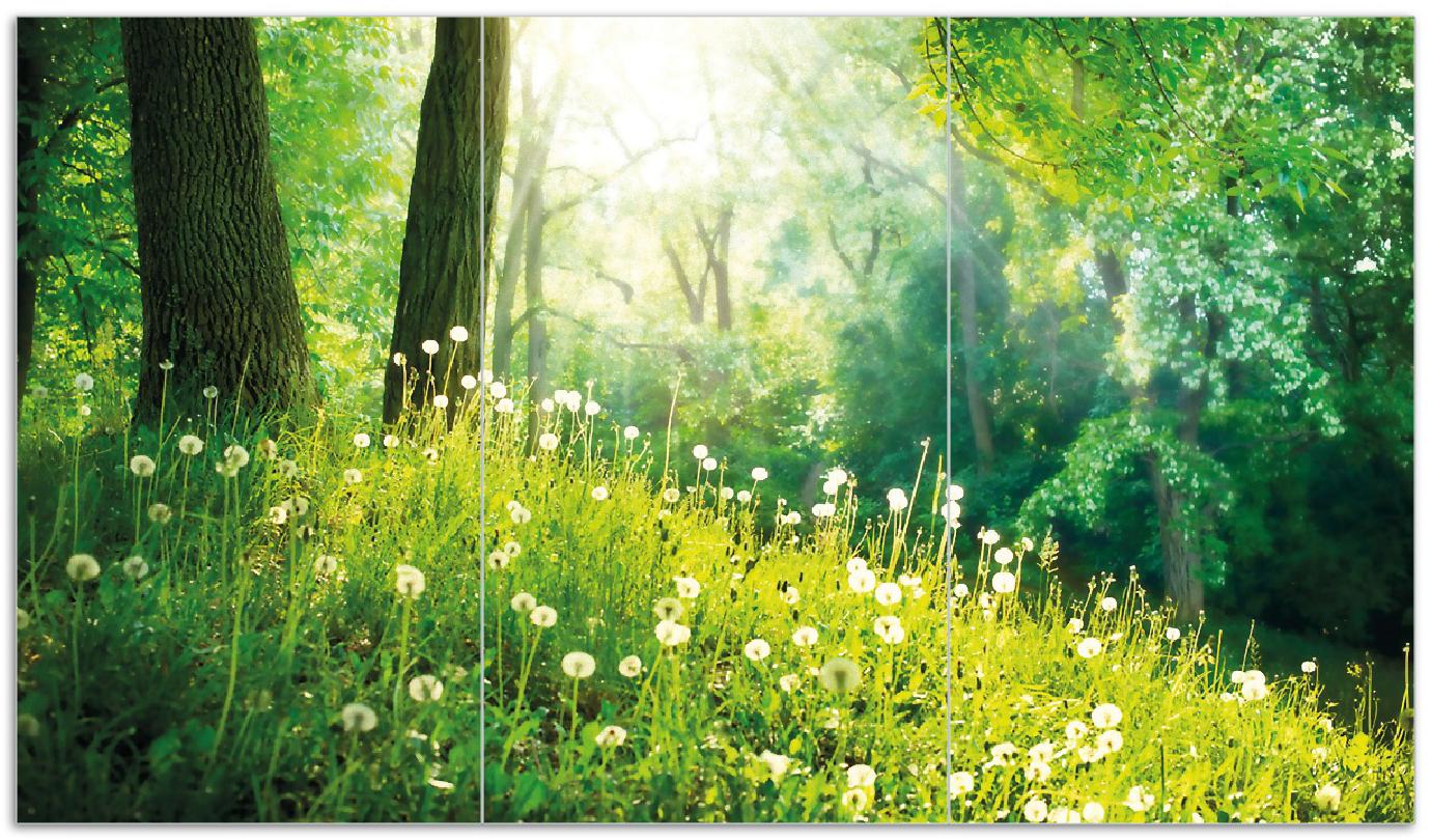Herdabdeckplatte Pusteblumen im Wald mit einfallenden Sonnenstrahlen – Bild 1