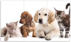 Herdabdeckplatte Hundewelpen und Katzenjunge
